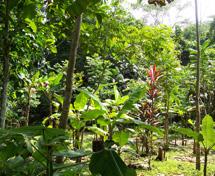 agroecologia01